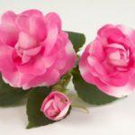 impatiens-new-guinea-Musica-Bicolor-flower-1024×680